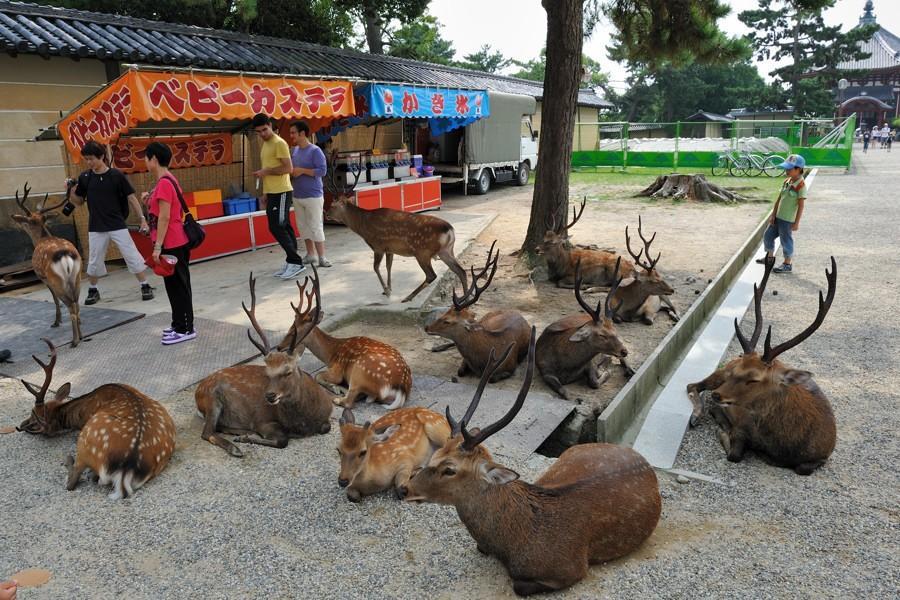 deers01