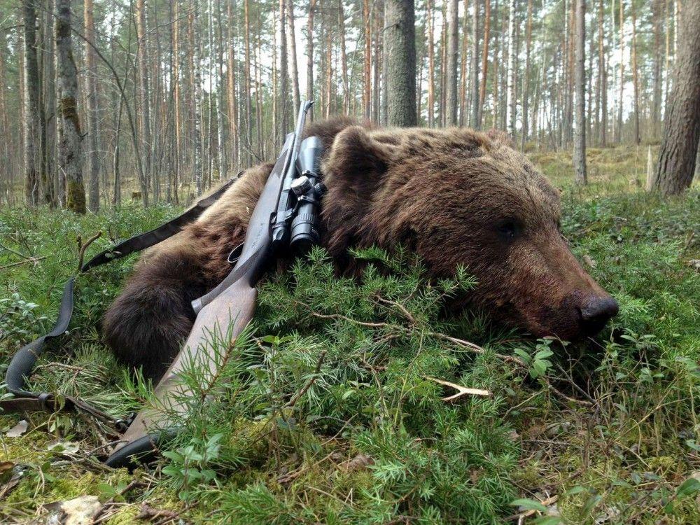 Пандемия и охота на медведя