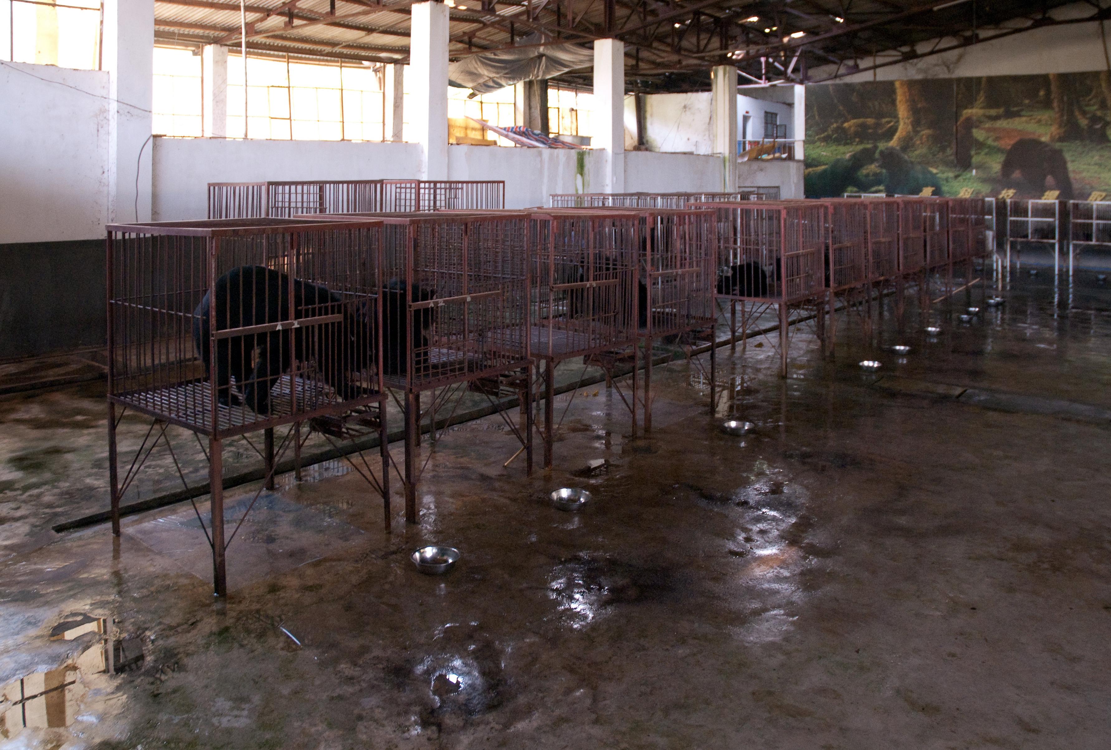 Вполне легальная медвежья ферма где-то в Китае.