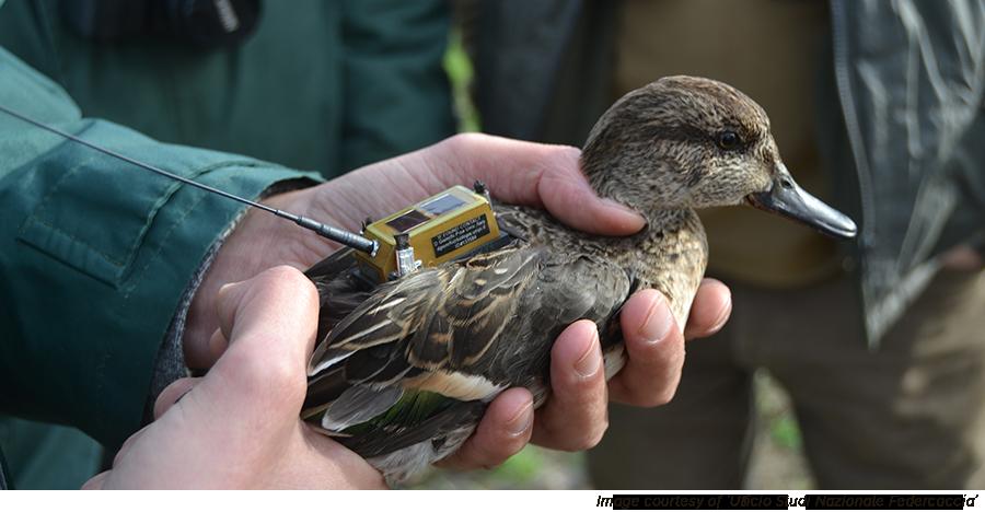 Охотники за биоразнообразие